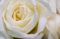 Hz.Fatima Annemizin Imanı, Ibadeti ve Cömertligi